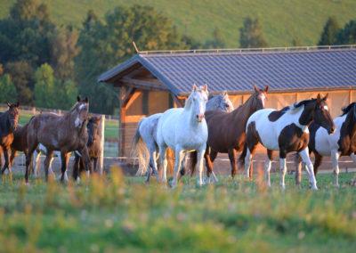 ubytovani_ustajeni_koni_orlicke_hory